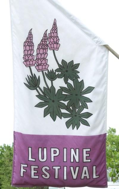 Lupine festival banner