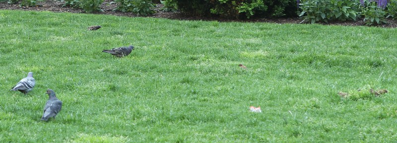 Birds in Dewey Square park