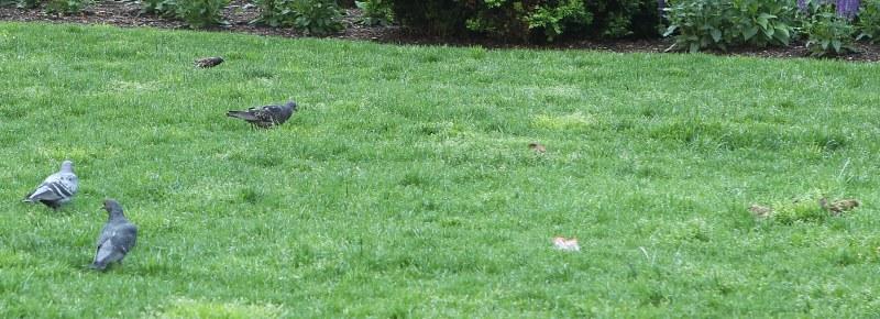 Birds in Dewey Square park