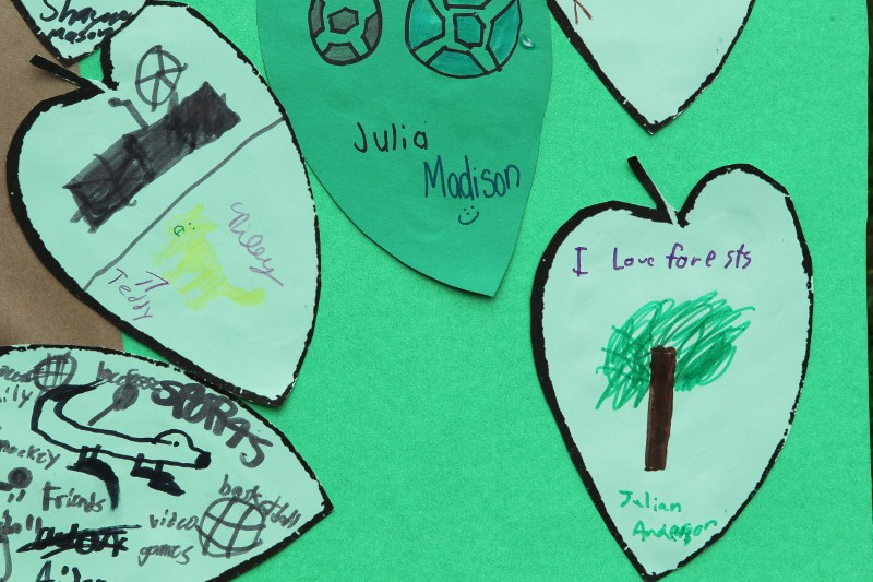 "Close-up of poster designed by Boston Public Schools students of falling leaves with text: ""I love forests"""