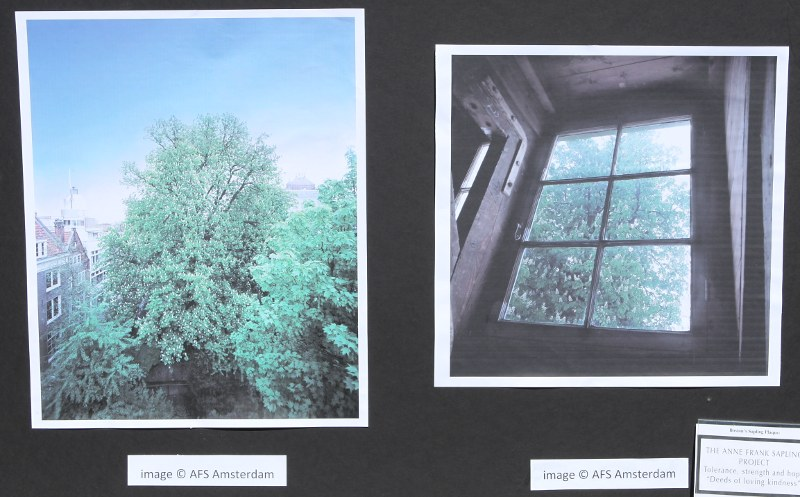 Two photos of the original Anne Frank tree