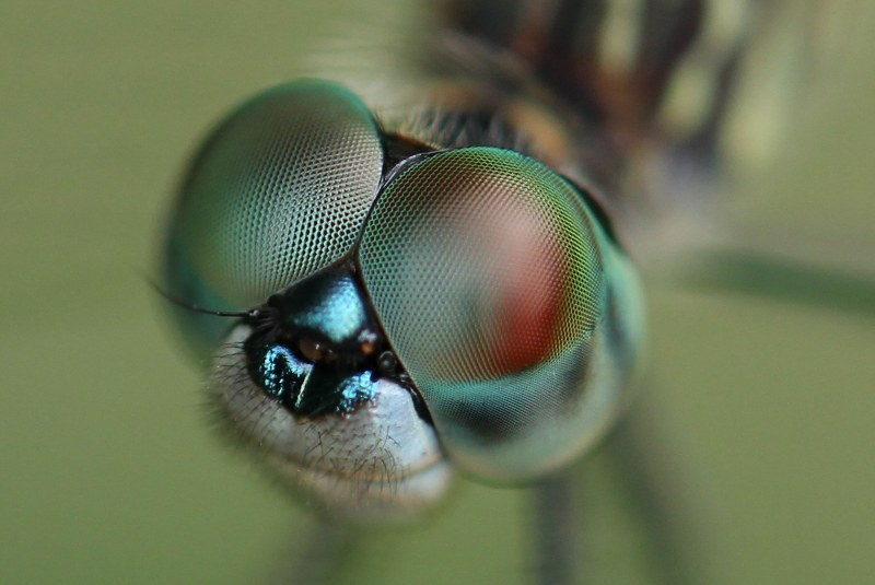 Close-up of female dasher face