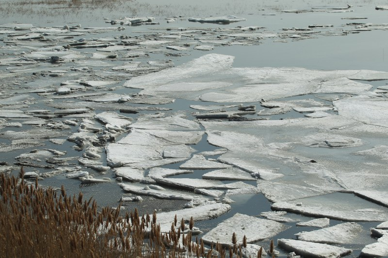 Ice on the marsh