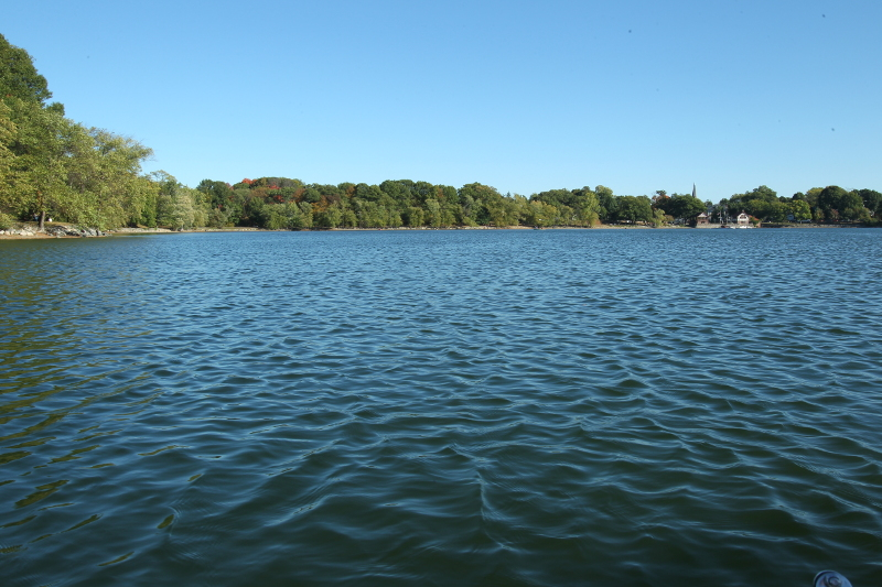 Waters and tree-line of Jamaica Pond