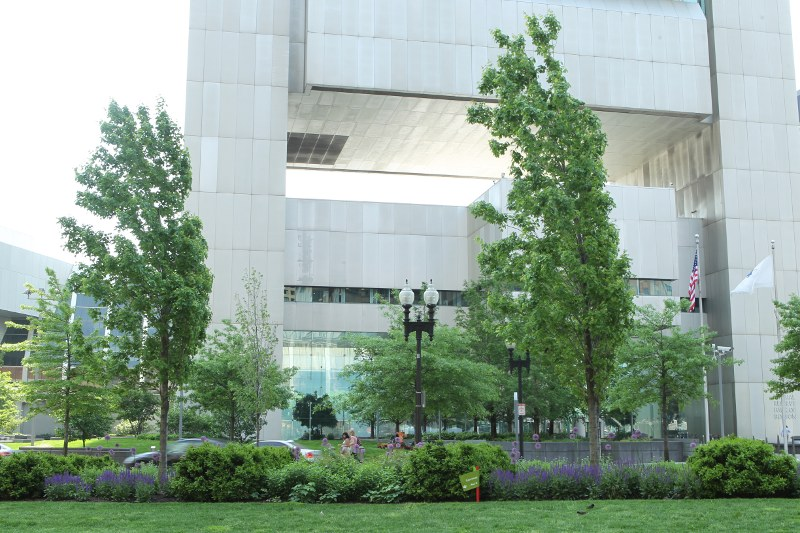 Leaning Freeman maples with Federal Reserve building behind them
