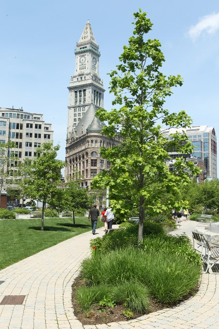 Young tulip tree with Custom House clocktower in background