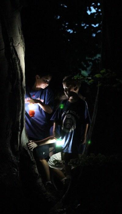 Boys in beech tree