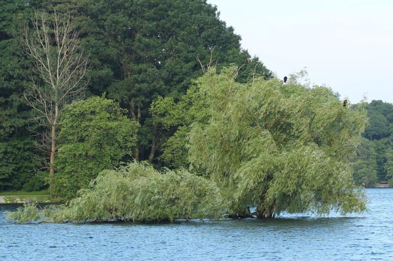 Willow island on Jamaica Pond under water